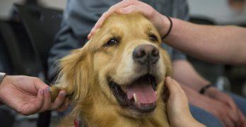 Service Dogs Lift Spirits