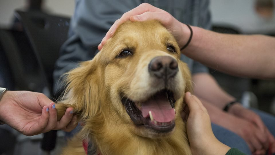 Service Dogs Lift Spirits