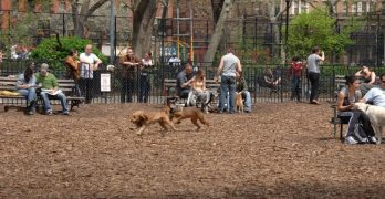 Top 10 Dog Parks & Runs of New York City