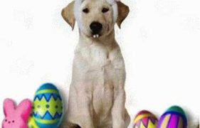 Easter Safety for Your Pets! Dark Chocolate Is Not a Treat for Them! 	 PDF