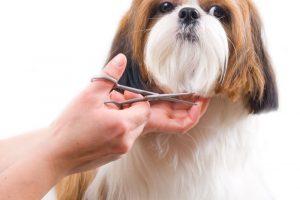Best-Dog-Grooming-Scissors