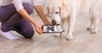 Best Dog food for itchy skin