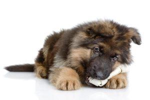 Dog food for German shepherd puppies