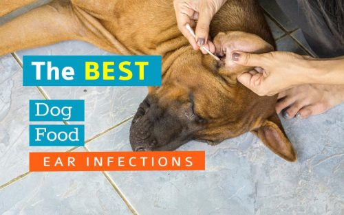 Ear-Infections-dog-food